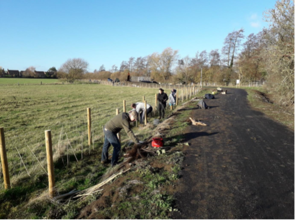 Volunteers planting along Waddesdon Greenway